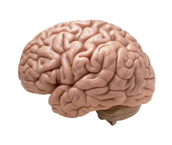 Como saber se meu cérebro está bom?