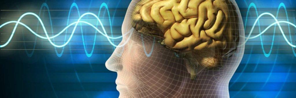 função cerebral